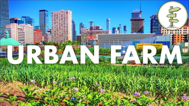 Growing Food in the City – Urban Rooftop Farm in Downtown Toronto