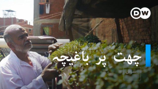 چھت پر باغیچہ | Greening Egypt's capital with rooftop gardens