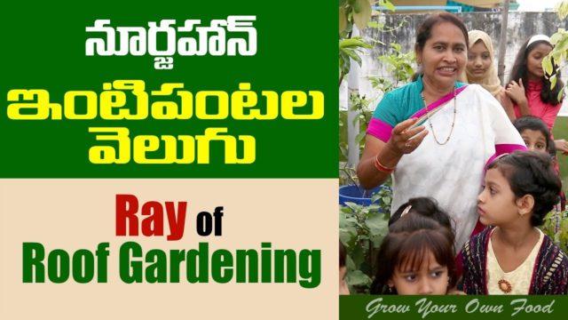 NoorJahan:Ray of Roof Gardening