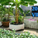 Terrace Gardening // best winter vegetables grow in containers (In Hindi) / Village Roof garden