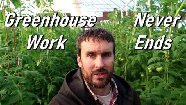 Hydroponic Tomato Farming | Weekly Plant Maintenance  | Wishwell Farms vlog 10