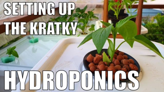 Growing With Kratky Hydroponics