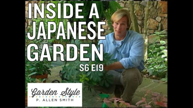 Indoor Gardening Tips | P. Allen Smith's Garden Style (619)