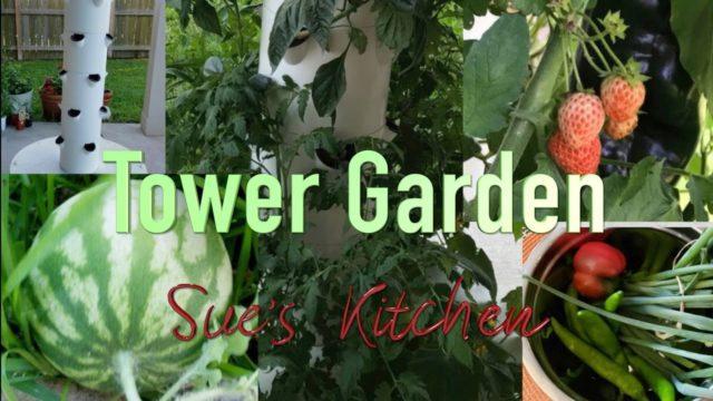 Tower Garden – Soilless garden