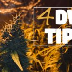 Growing Monster Plants & Dense Nugs in DWC