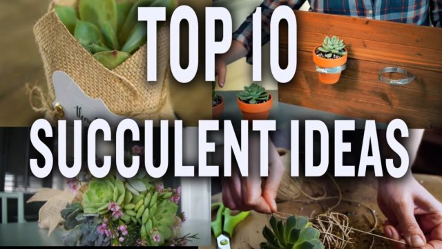Top Ten Succulent Projects: P. Allen Smith (Tips & Ideas)