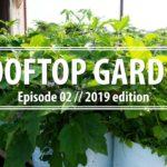 Rooftop Gardening || 2019 Edition || Episode 02