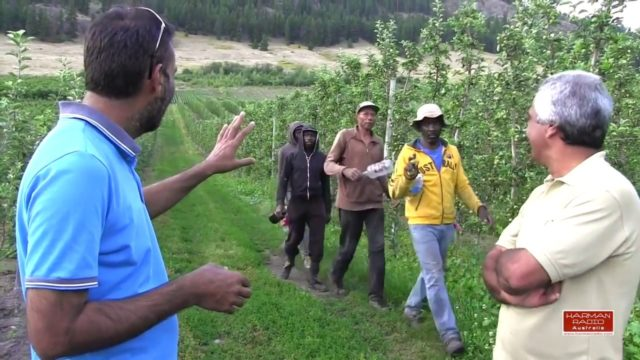 Pendu Australia Episode 28 | Magnetic Hill and Apple farming in Vernon Canada