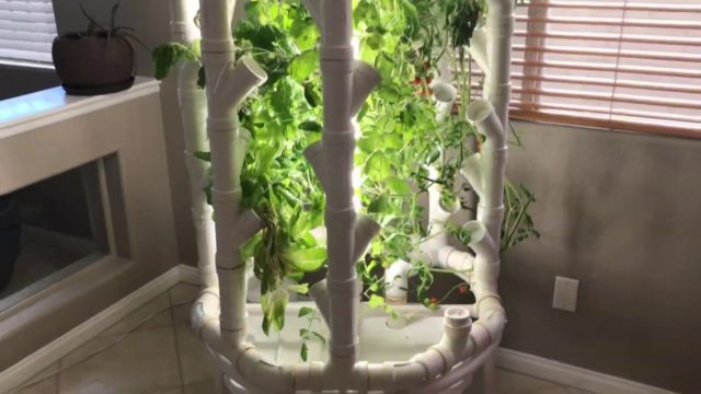DIY Indoor Grow Tower Vertical Hydroponics – Week 12: Las Vegas