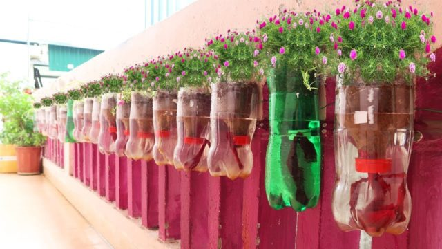 Amazing Plastic Bottle Vertical Garden Ideas, Plastic Bottles on Walls