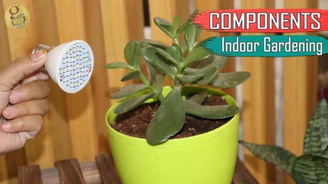 BASIC COMPONENTS OF INDOOR GARDENING | Indoor Garden Ideas