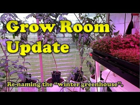 Grow Room | Hydroponic Drip & NFT (21 Feb 19)