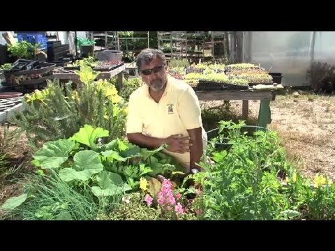 Methods of Planting Vegetables : Vegetable Gardening 101