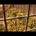 GreenStalk Vertical Grow System – Green Stalk