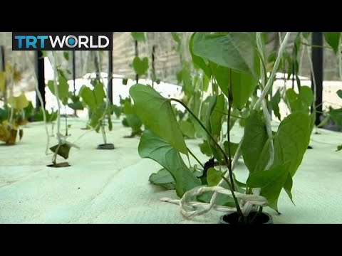 Nigeria Aeroponics Farming: Entrepreneur grows crops without soil