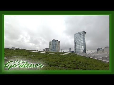 Green Roof: Music City Center| Volunteer Gardener