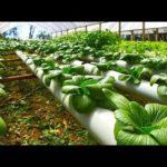 Hydroponic Gardening – Grow Organic Plants in Plastic Pipe Easy