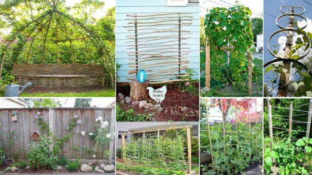 120 Easy & Cheap DIY Garden Trellis Ideas | DIY Garden