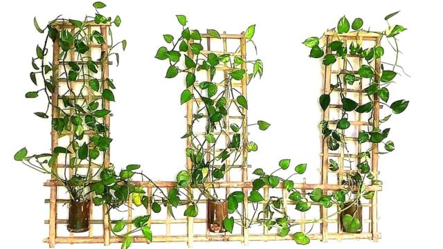 How to Make Beautiful Wall Hanging Money Plant Room Decoration with Bamboo | Money Plant Wall Decor