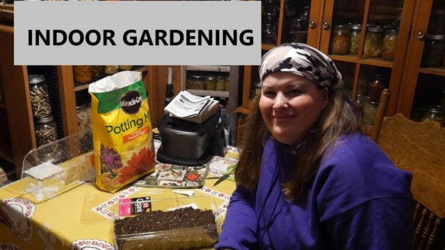 Shopping  With Tessie  and Indoor  Gardening
