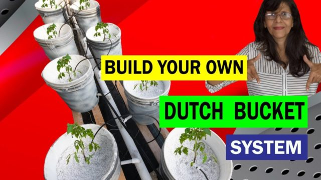 Dutch Bucket System.How to build a Dutch Bucket Hydroponic System