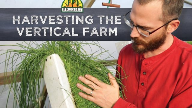 How to Harvest a Vertical Farm
