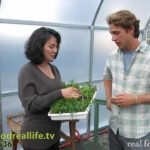 How to Plant Your Tower Garden Seeds – real food. real life.