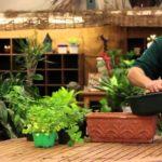 The Best Way to Grow Herbs Indoors