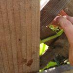 Growing Vertically | Training Vines to Climb a Trellis | Grow Squash Vertically | Garden Quick Tips