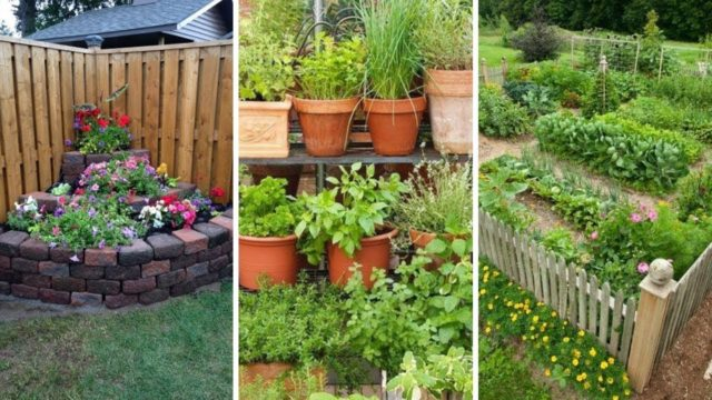 10 backyard vegetable garden ideas