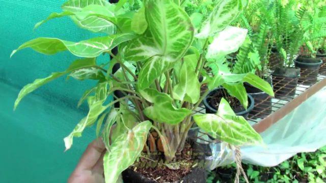 Established Plants For Vertical Gardens