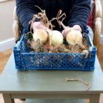 Some winter indoor gardening jobs that you might want to do.