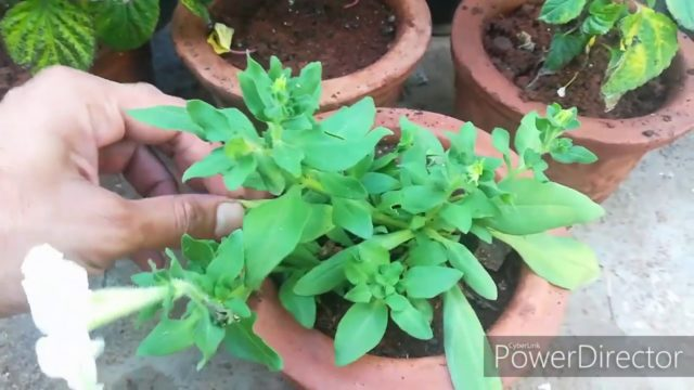 Best Easy Going Plant For Winters||Easy Winter Plants With Low Care