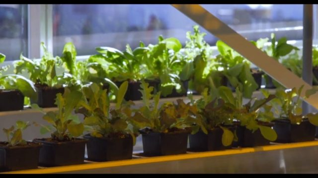 Vertical Farm | The Henry Ford's Innovation Nation