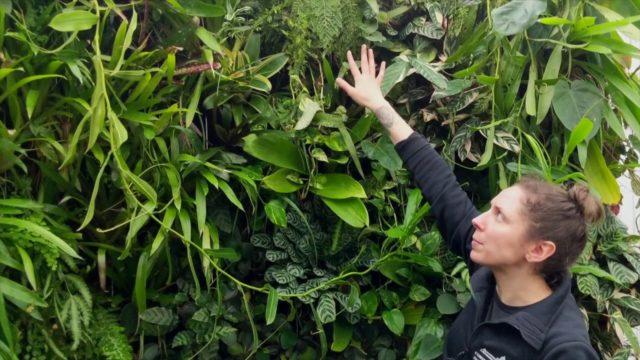 Florafelt Vertical Gardens
