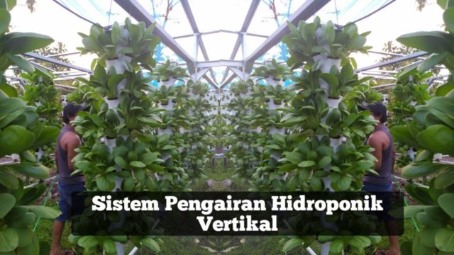 SISTEM PENGAIRAN TOWER HIDROPONIK VERTIKAL | WATERING SYSTEM ON VERTICAL TOWER HYDROPONIC