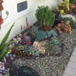 Succulent Garden One Year After Installation