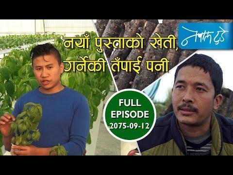 Hydroponic farming, Sitake farming –  नयाँ पुस्ताको खेती, गर्नेकी तपाईं पनी ? | NEPALTODAY: