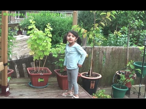 Kid's Fun Fruit Trees and Plants Garden UK (E1 – August 2012)