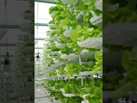 Vertical farming | Wikipedia audio article