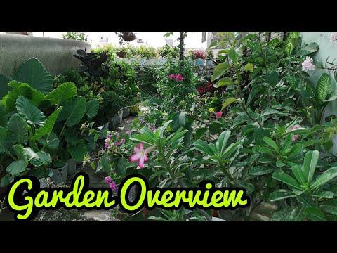 Learning gardening