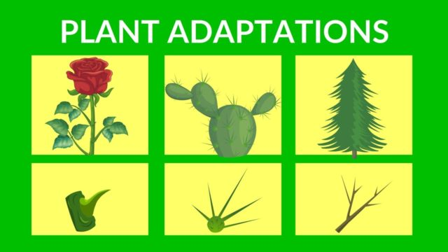 Adaptations in Plants | Video lesson for Kids