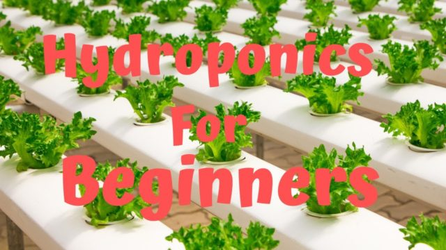 Hydroponic Farming at Home Hydroponics for Beginners 2019-2020
