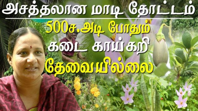 Agriculture and organic farming – high yielding organic terrace garden at chennai
