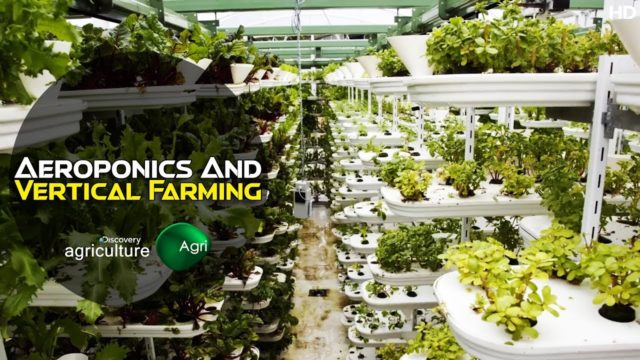 News & Media: Future Growing Vertical Aeroponics in Greenhouses