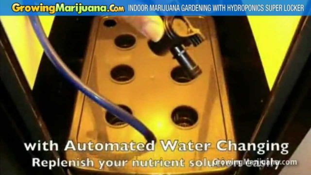 Indoor Marijuana Gardening With Hydroponics Super Locker For Home Weed Growing