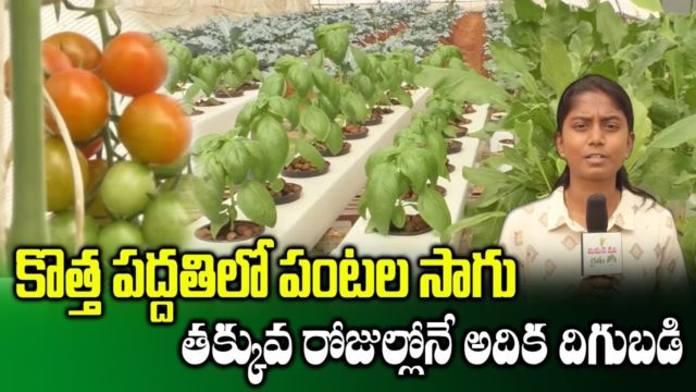 Crops Farming in Hydroponic Technology || Hydroponic Agriculture || SumanTV Rythu