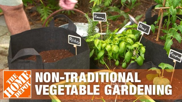 Non-traditional Vegetable Gardening | The Home Depot