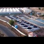 First Time In India: Turmeric Vertical Farming By A S Agri And Aqua LLP, Mahrashtra