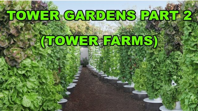 Tower Gardens Part 2 (Tower Farms)